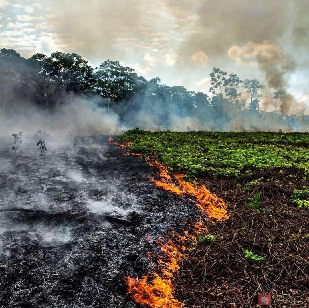 你的碗里,装着亚马逊雨林的未来